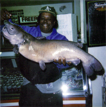 2125_James J. Robinson_White Catfish_Ameiurus catus.jpg